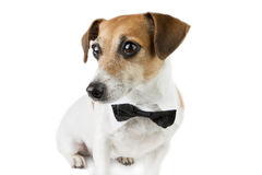 Pet elegant clothes Royalty Free Stock Photos