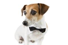 Pet elegant clothes Royalty Free Stock Photos