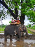 Pet elephant animals in india stock images