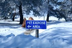 Pet Exercise Area Stock Photography