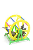 Pet Exercise Wheel. S with Toy Rats on white background royalty free stock photo
