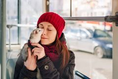 Pet ferret taking a ride on city tram. Young female in a red cap bonding with her ferret on a tram on a sunny day. Woman and a pet concept Royalty Free Stock Image