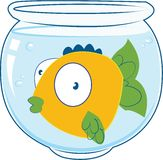 Pet Fish Royalty Free Stock Photo