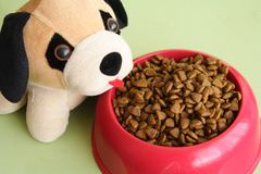 Pet and food Stock Image