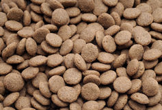 Pet food. Animal biscuit biting brown canine Stock Photography