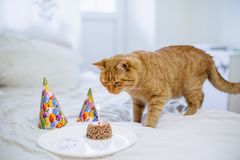 Pet food cake for cat birthday stock image