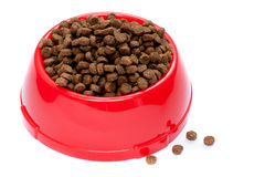 Pet food in red bowl royalty free stock images