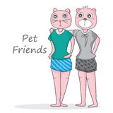 Pet Friend cat bear Stock Photography