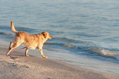 Pet friendly beach royalty free stock images