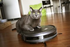 Pet friendly smart vacuum cleaner royalty free stock photos
