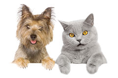 Pet friends Stock Photography