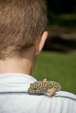 Pet Gecko Stock Photo