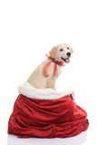 Pet gift for christmas holiday. Pet dog gift for christmas holiday Stock Image
