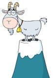 Pet Goat Atop A Mountain Stock Images