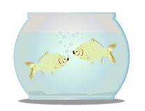 Pet Goldfish Bowl. A trpical pet goldfish bowl with fish over a white background Royalty Free Stock Photos