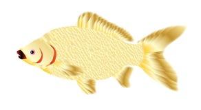 Pet Goldfish Royalty Free Stock Image