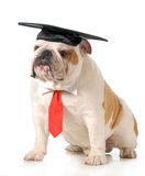 Pet graduation Royalty Free Stock Images
