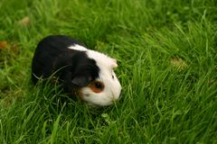 Pet on a grass background Stock Photos
