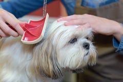 Pet groomer brushing dog. Dog royalty free stock photos
