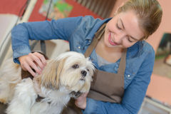 Pet groomer with dog Stock Image