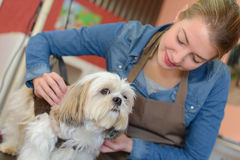 Pet groomer with dog Royalty Free Stock Images