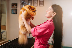 Pet groomer holds funny dog in hands Royalty Free Stock Images