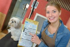 Pet groomer and shop. Pet Royalty Free Stock Images