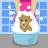 Pet groomer washing dog with soap foam in blue wash-basin in bathroom Royalty Free Stock Photos