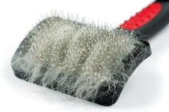 Pet grooming brush Royalty Free Stock Image