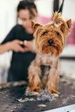 Pet Grooming. Woman Cutting Dog Nails At Animal Spa Salon. Closeup Of Funny Dog`s Face. High Resolution stock photos