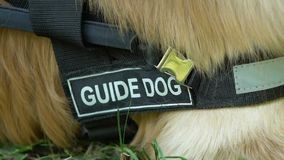 Pet with guide dog inscription on collar lying on grass, specially trained dogs
