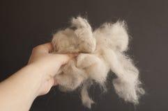 Pet hair Stock Image