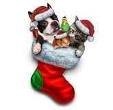 Pet Holiday Stocking Stock Images