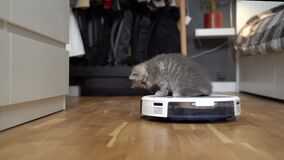 Pet and housework, smart technology concept. Robot vacuum cleaner and playing gray tabby Scottish Straight kitten at