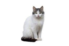 Pet il gatto Fotografie Stock