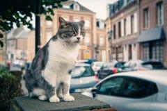 Pet il gatto che cammina sulle vie di una città europea Immagini Stock Libere da Diritti