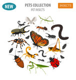 Pet insects breeds icon set flat style isolated on white. House stock illustration