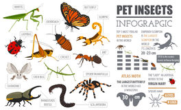 Pet insects breeds icon set flat style isolated on white. House royalty free illustration