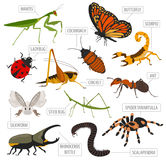 Pet insects breeds icon set flat style on white. House royalty free illustration