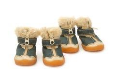 Pet le scarpe per quattro zampe, abbigliamento dell'animale domestico Fotografia Stock
