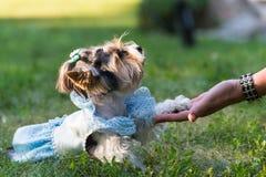 Pet stock images