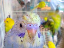 Pet lives. Birds breathe through the nose Stock Image