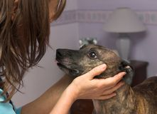 Pet love Royalty Free Stock Photography