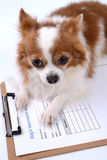 Pet medicine form Stock Photo