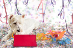 Pet message for Carnival. Westie Highland White Terrier looking at a message at Carnival Party time Royalty Free Stock Photography