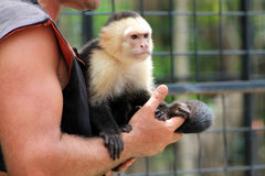 Pet monkey being held Stock Images