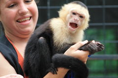 Pet monkey being held and screeming Royalty Free Stock Photo