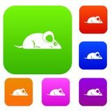Pet mouse set color collection. Pet mouse set icon color in flat style isolated on white. Collection sings vector illustration Stock Photos