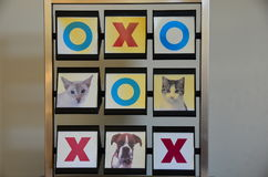 Pet Noughts and Crosses. O X cat kitten dog pets learning squares cat cats noughts crosses zero zeros flip learn puppy boxer cross times multiplication Royalty Free Stock Image