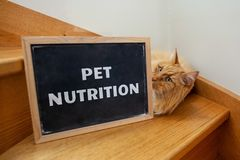 Pet nutrition issue depicted with cat. Pet nutrition issue depicted with cat and text on blackboard stock image